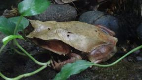 Interesting Frog